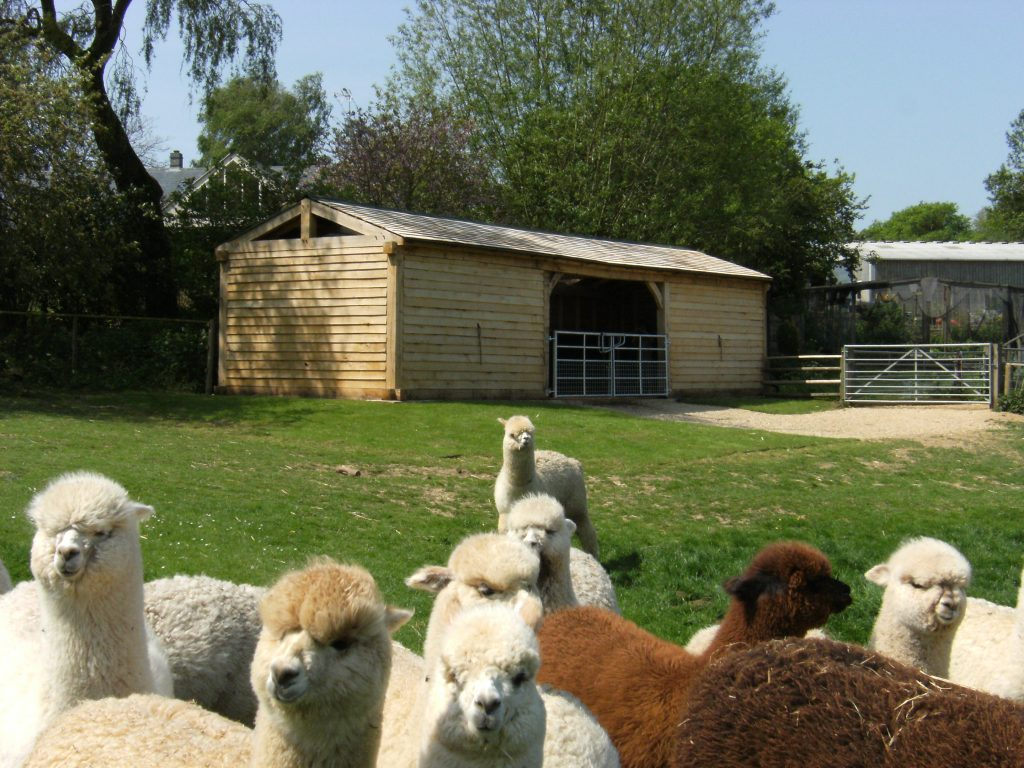 Green Oak Field Shelter Barn